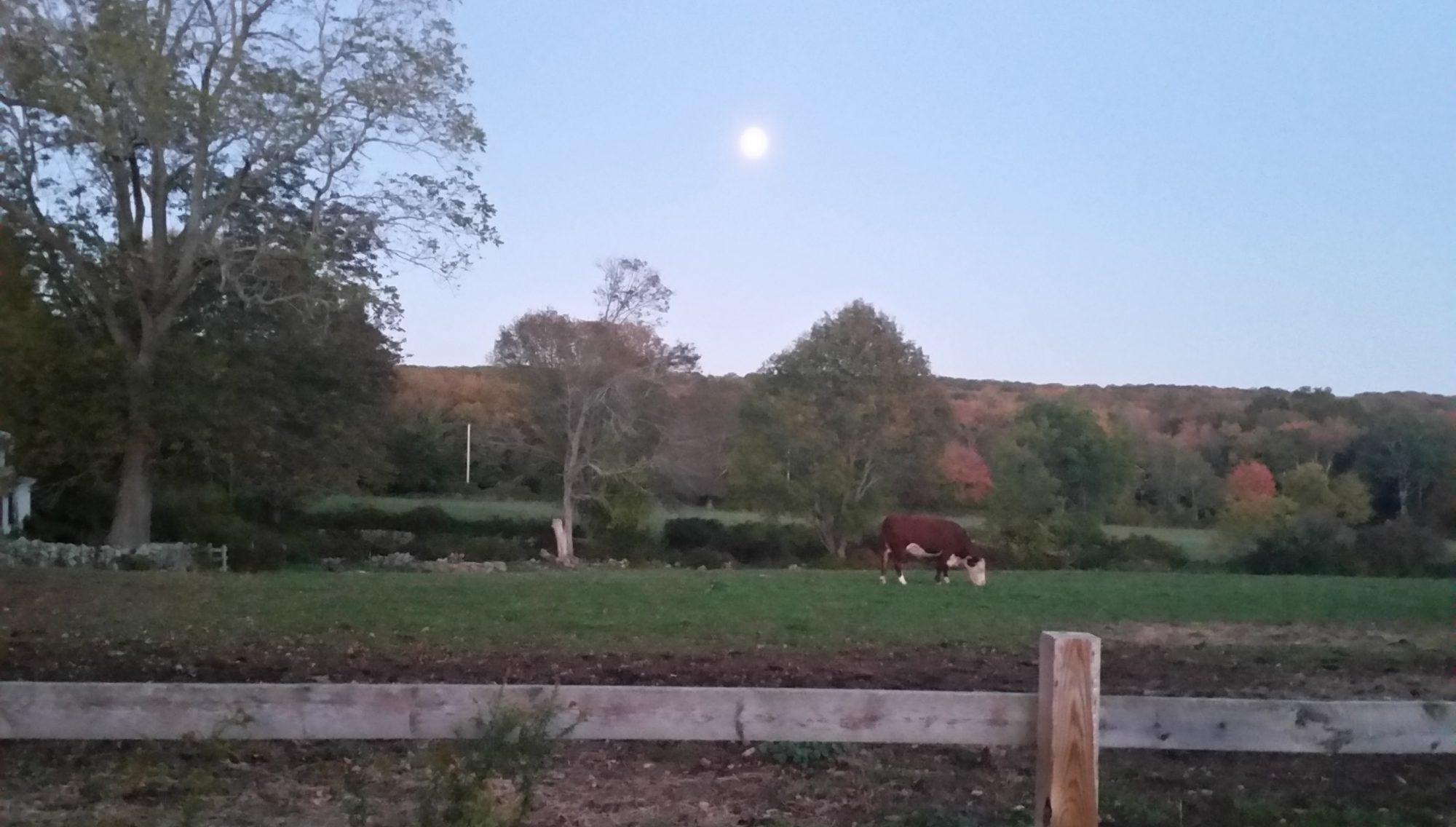 Russet Valley Farm